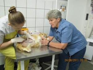 Уретростомия котов - спасение от мочекаменной болезни