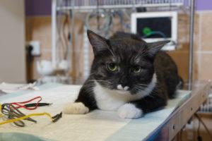 """Кот на физиотерапии, ветеринарная клиника """"Айболит Плюс"""""""