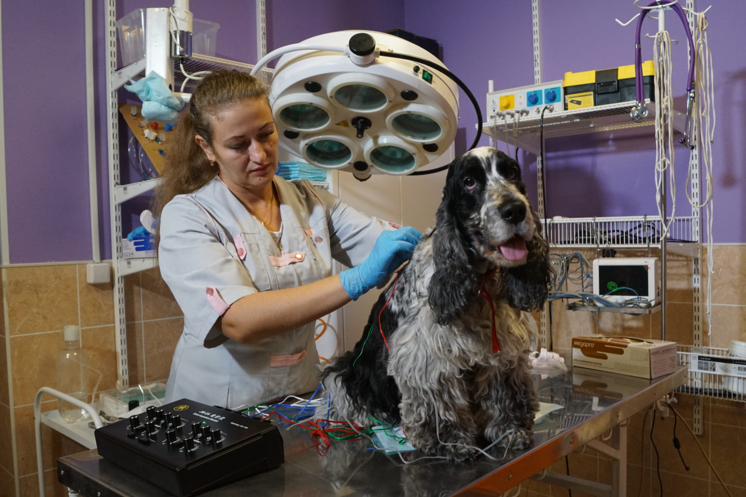 """Собака на акупунктуре в ветеринарной клинике """"Айболит Плюс"""""""