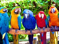 лечение попугаев