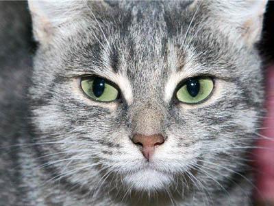 Стерилизация кошек и собак