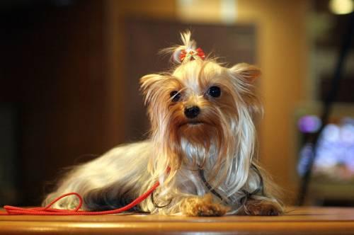 стрижка собак груминг