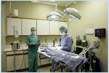 хирургия в айболите