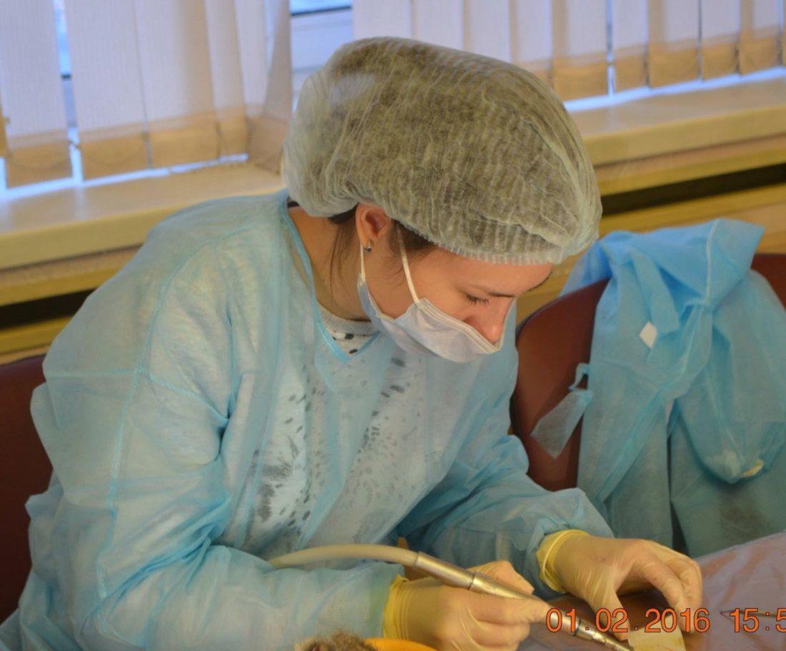 экипировка ветеринара стоматолога
