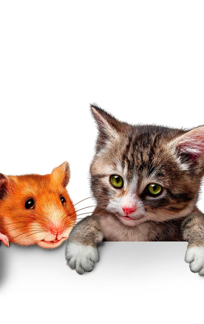 Стационар для домашних животных