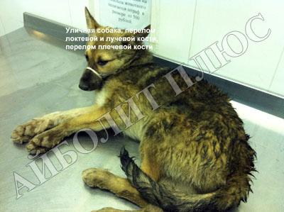 Лечение переломов у животных