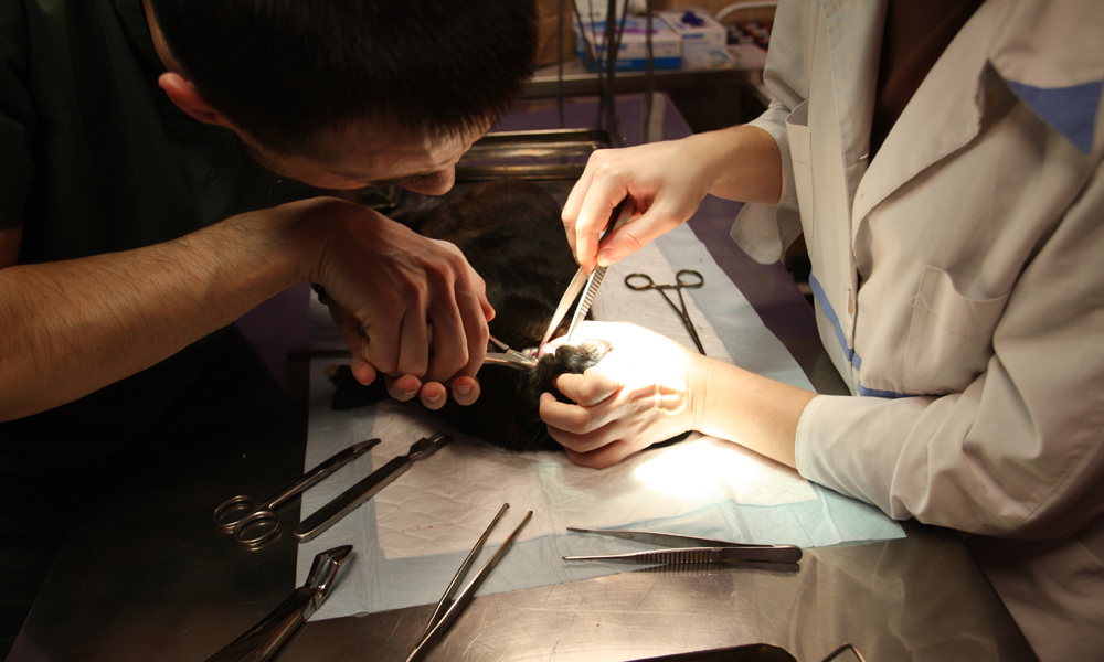 Ветеринар стоматолог