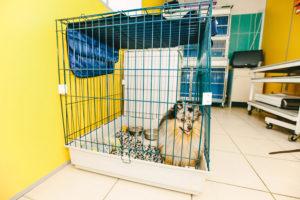 Стационар для собак, кошек и других животных