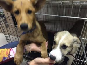 """Собаки в ветеринарной клинике """"Айболит Плюс"""""""