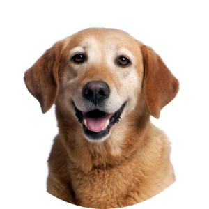 Счастливый пёс