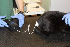 Измерение давления коту