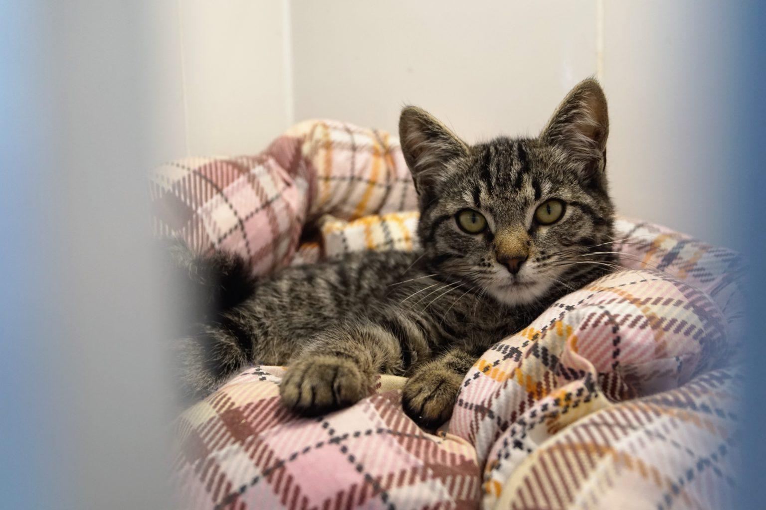 """Котёнок в стационаре ветеринарной клиники сети """"Айболит Плюс"""" (филиал на Речном вокзале)"""
