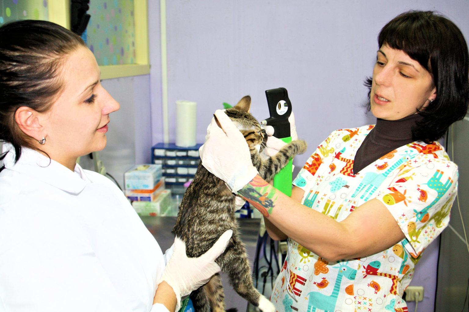 Ветеринарный врач Мельникова Ольга Леонидовна проводит офтальмологический осмотр питомца новым офтальмоскопом.
