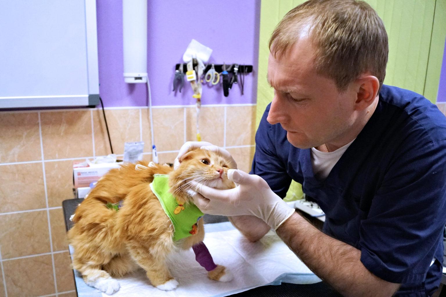 Кошка Ася на приёме у хирурга Константинова Александра Александровича