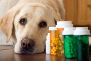 антибиотики при цестите