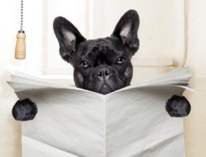 5 советов начинающим собаководам