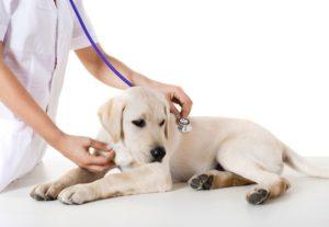 Клиника для животных