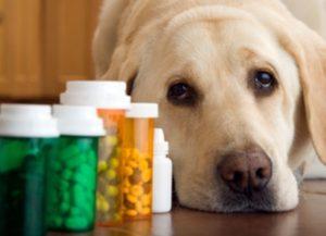 собака съела таблетки
