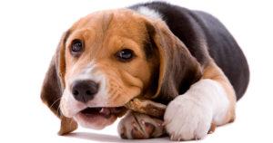 Что делать, если собака съела кость