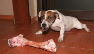 Собака съела кость