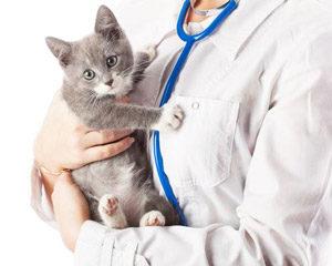 Ветеринарный врач и котёнок