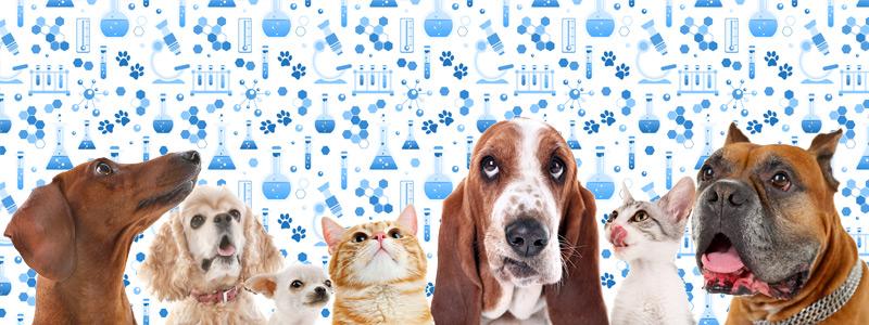 Ветеринарная лаборатория и ветеринарные анализы