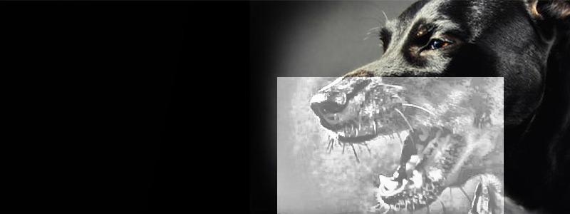 Стоматологический рентген для собак и кошек