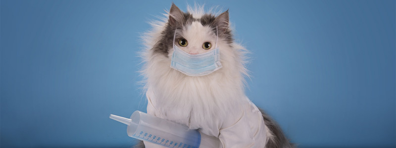 Прививка кошек