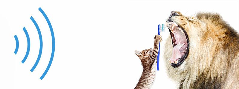 чистка зубов ультразвуком у собак и кошек