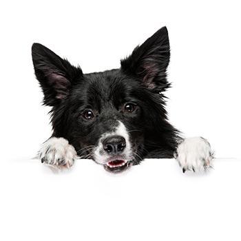 Стригущий лишай у собак
