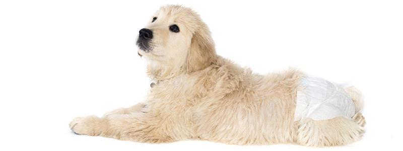 Цистоскопия домашних животных