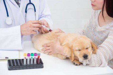 Анализ крови у щенка