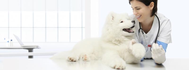 Клинический анализ крови собаки