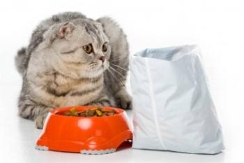 Кот смотрит на пакет и еду