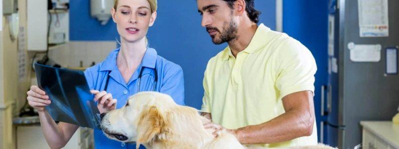 Рентген лап собаки в ветеринарной клинике