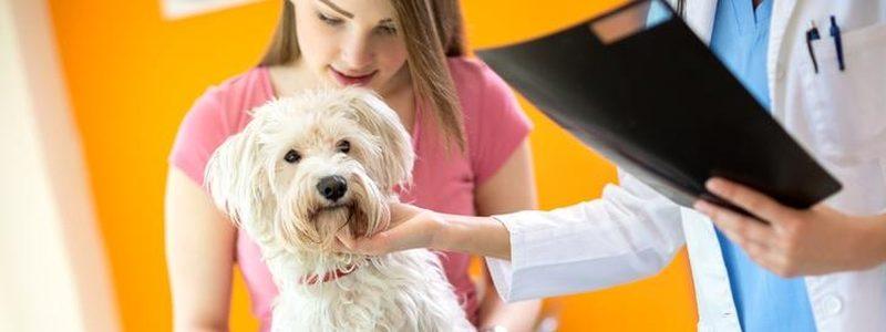 Рентген собаке в ветеринарной клинике