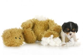 Собака ест игрушку