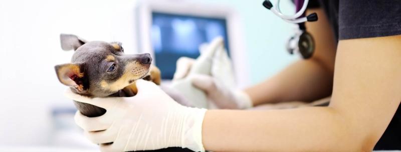 Ультразвуковое исследование (УЗИ) животных