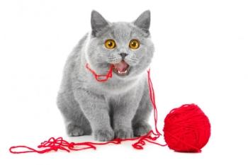 Кошка ест веревку