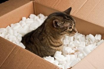 Кошка в коробке с пенопластом
