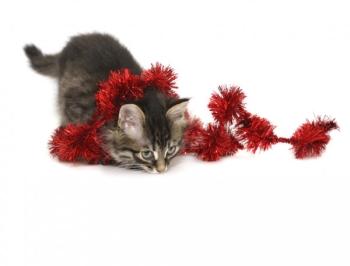 Кот играет с мишурой