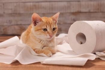 Проблемы с мочеиспусканием у кота