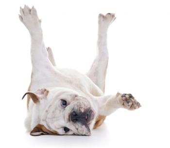 Суставы ног собаки