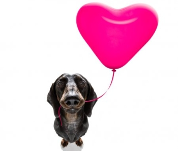 Собака и шарик