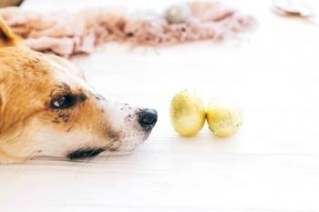 Собака и игрушки в фольге