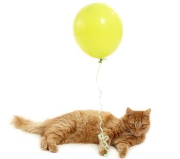 Кошка играет с воздушным шариком