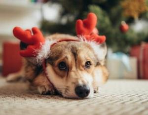 Собака рядом с ёлкой