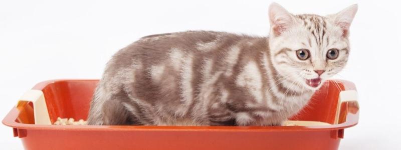Кот мочеиспускание