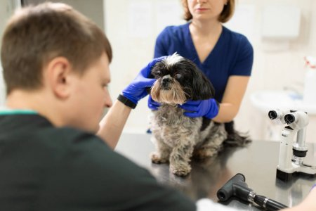 Ветеринарный врач офтальмолог