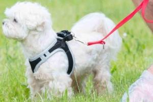 Анализ кала собаки